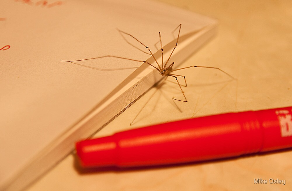 Spidery Handwriting by Mike Oxley