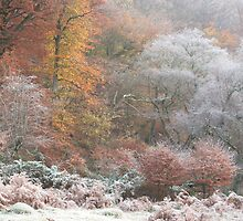 Autumn frost in Silent Valley by Jane Corey