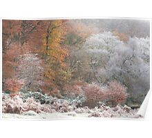 Autumn frost in Silent Valley Poster
