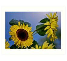 Sunflowers for my Sister Art Print