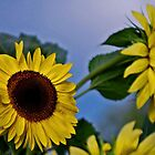 Sunflowers for my Sister by Diane Blastorah