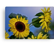 Sunflowers for my Sister Canvas Print