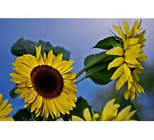 Sunflowers for my Sister Photographic Print