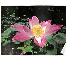 Ubud Lotus Poster