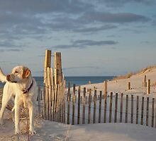 Beach Dog by bettywiley