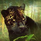 Dark Kitty by Trudi's Images
