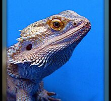 Bearded Dragon by Angie O'Connor