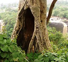 An Old Tree near the Blue Nile Falls by Laurel Talabere