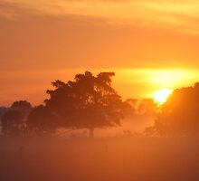 Sunrise of Oxley #4 by Jodie Bennett