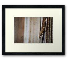 Brown Gecko Framed Print