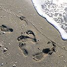Footprints in the Sand by Rosalie Scanlon