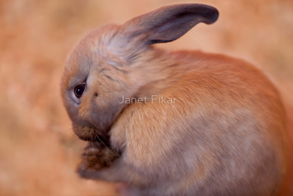 Soft Things in Life by Janet Fikar