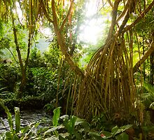 { costa rican jungle } by Brooke Reynolds