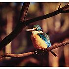 Sacred Kingfisher by Tony Peri