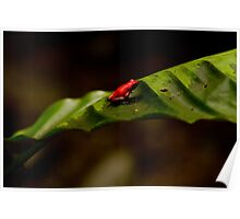 { red poison dart frog } Poster
