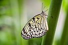 Rice paper by PhotosByHealy