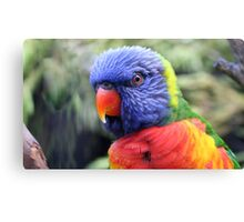 { rainbow lorikeet } Canvas Print