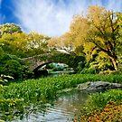 { amazing central park } by Brooke Reynolds