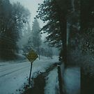 through the snowy road. by Stephanie Welling