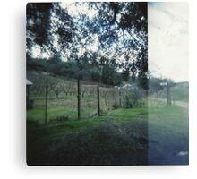 vineyard. Canvas Print
