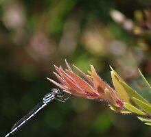 Dragonfly #1 by Jenni Greene