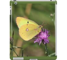Beautiful Clouded Yellow Butterfly iPad Case/Skin