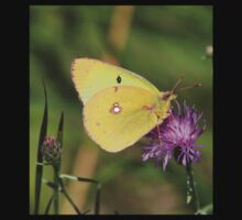Beautiful Clouded Yellow Butterfly One Piece - Short Sleeve