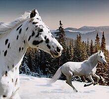Winter Wonderland by Laura Palazzolo