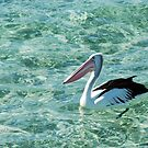 Palm Beach Pelican by Kell Rowe