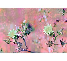 Botanical Abstract in Pastel VIII Photographic Print