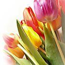 Floral Rainbow by Aj Finan