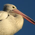 Pelican by KiriLees