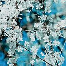 Blossom by Kell Rowe