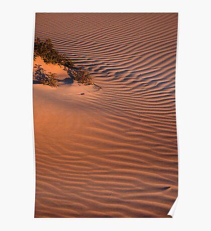 Dune Life Poster