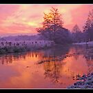 Winter Sunrise over River Wensum,Norwich,Norfolk,UK by Gordon Holmes