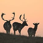 Fallow deer enjoying the last sunlight by DutchLumix