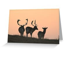 Fallow deer enjoying the last sunlight Greeting Card