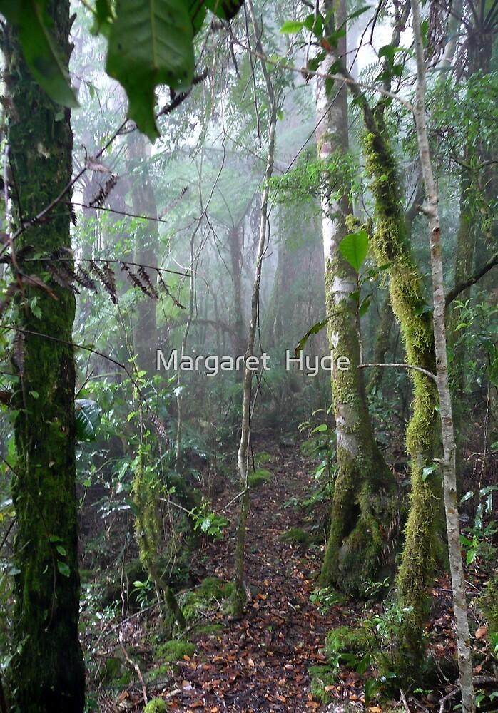 Falcorostrum Loop, Border Ranges National Park, NSW, Australia by Margaret  Hyde