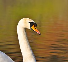 Rydal Water Swan by Jacqueline Wilkinson