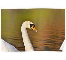 Rydal Water Swan Poster