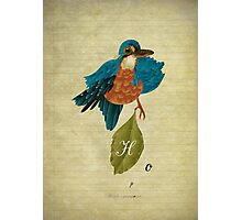 Indigo kingfisher's hope Photographic Print