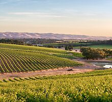McLaren Vale Magic by Ray Warren
