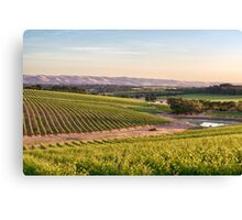 McLaren Vale Magic Canvas Print