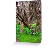Capel Cemetery Grounds WesternAustralia Greeting Card