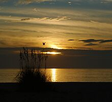 Seagull Sunset by Ben Waggoner