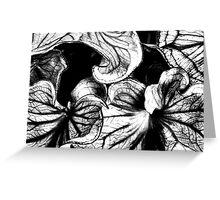 Caladium Bleached, Black & White Greeting Card