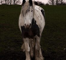 portrait of a local rescue horse by David Ford Honeybeez photo