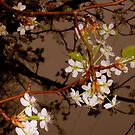Flowering Branch by Dawn di Donato