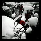 Winter Berries by Erin  Sadler