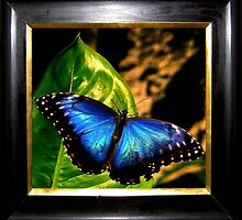 Framed Butterfly ~ Part One by artisandelimage